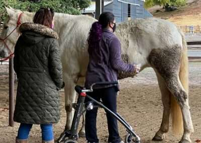 Back view of two people brushing down a horse
