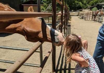 Brown horse in corral reaches out and nuzzles little girl nose