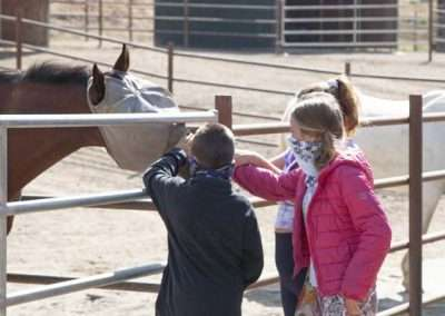 Couple young children reach into corral to pet horse