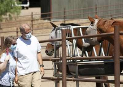 Two horses facing towards two people that are looking towards them