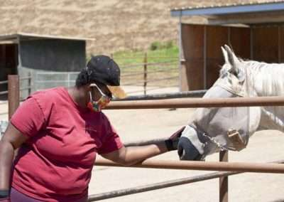 Lady reaches into corral to pet horse on the nose