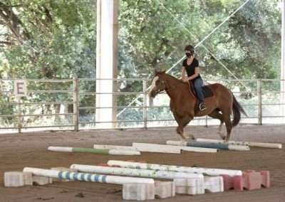 Girl on galloping horse practicing low jumps