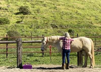 From the back, a woman brushes a relaxed Palamino horse